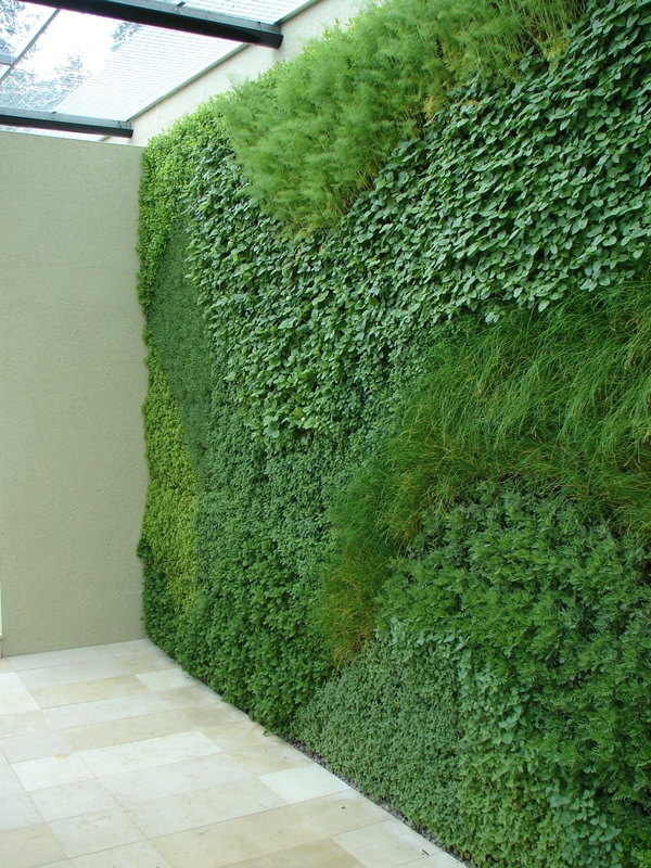 Living walls design insider Indoor living wall herb garden
